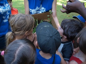 Kids learn about composting at New Country Day Camp!
